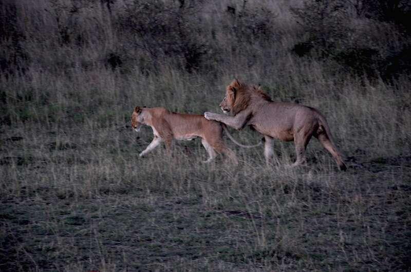 Leoes Mara