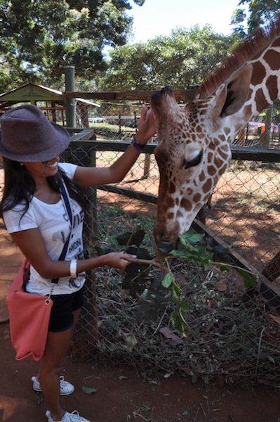 Nairobi - Alimentando a girafa