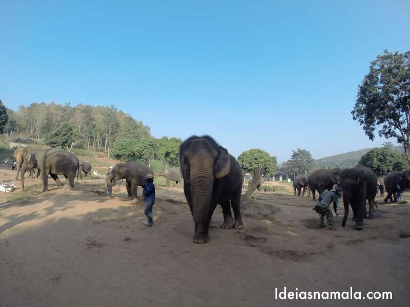 Refugios de elefante - Chiang Mai