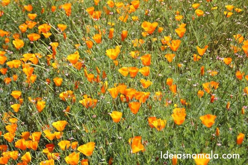 E olha só que lindas as florzinhas que vimos durante o tour