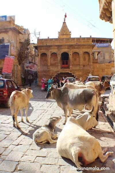 Vacas estacionadas no forte de Jaisalmer