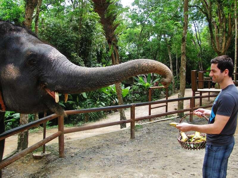 Alimentando elefantes em Phuket