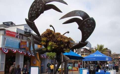 Carangueijo no Pier 39 - San Francisco