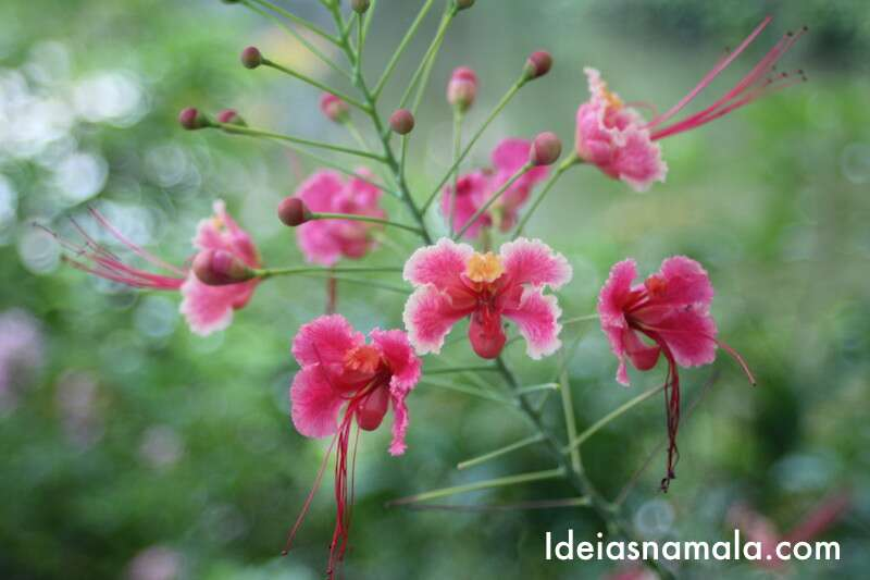 Flor - Jardim Botânico de Cingapura