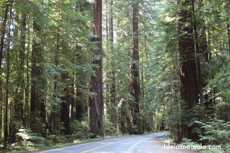 Avenida dos Gigantes - Califórnia