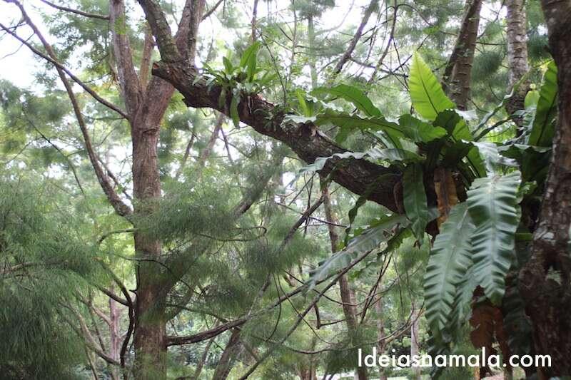 Árvore no Jardim Botânico de Cingapura