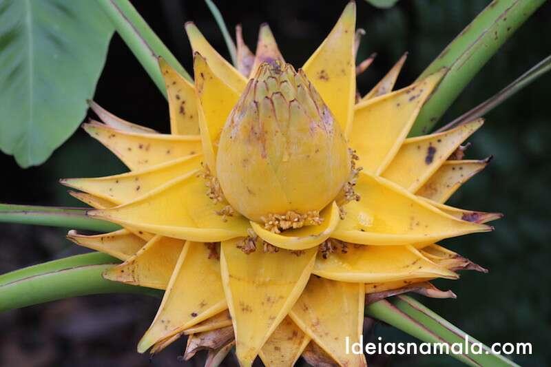 Flor exótica - Jardim Botânico de Cingapura