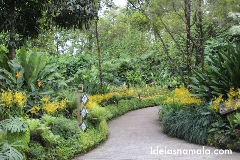 Caminho de chuva de ouro no jardim botânico de Cingapura