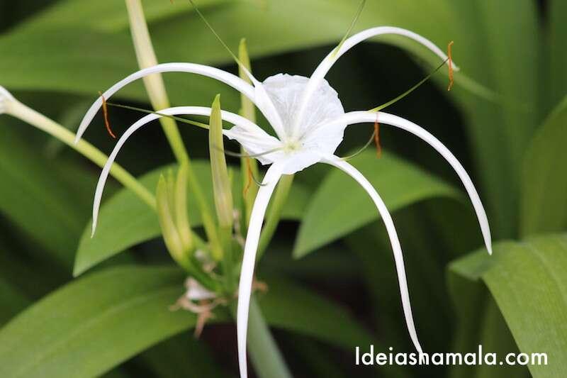 Orquídea - Jardim Botânico de Cingapura