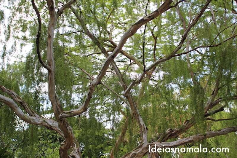 Jardim Botânico de Cingapura