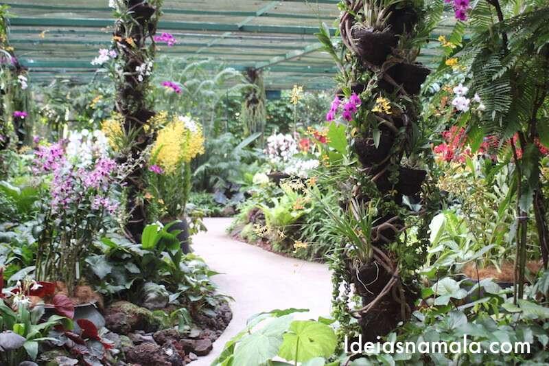 Orquidário do Jardim Botânico de Cingapura
