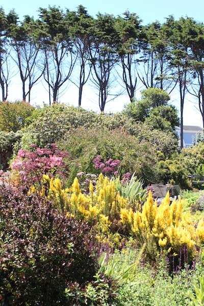 Entrada do jardim: canteiros coloridos e flores altas
