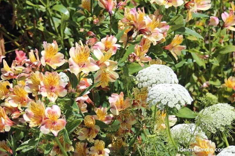 Flores no Jardim Botânico de Mendocino - Califórnia
