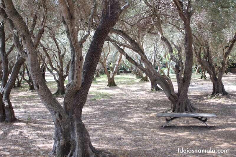 Árvores em Filoli
