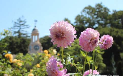 Jardins Filoli - Flores