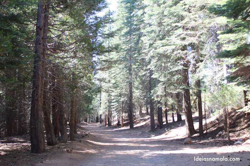 Merced Grove no Yosemite Park
