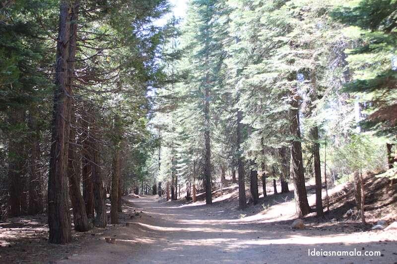 Merced Grove no Yosemite Park