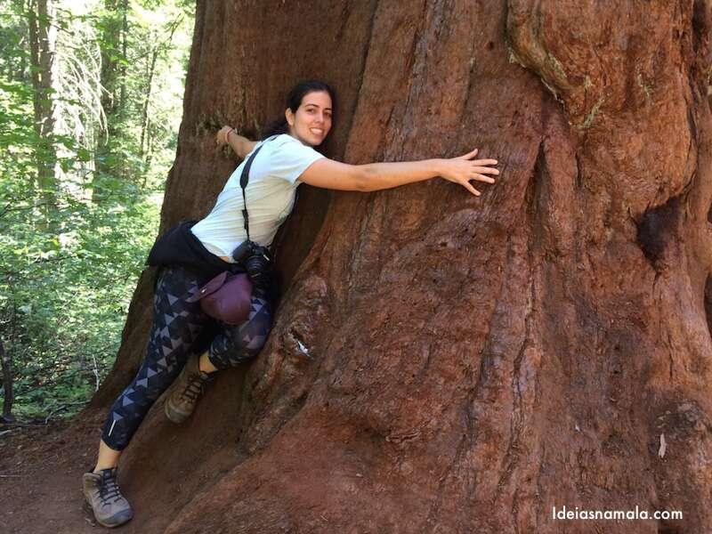Sequoia gigante -Yosemite