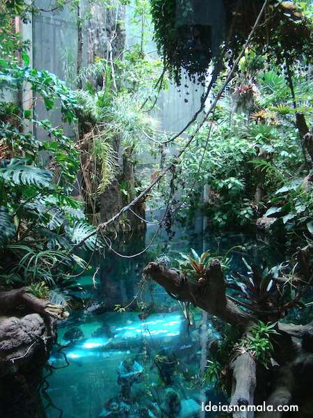 Floresta Tropical - California Academy of Science
