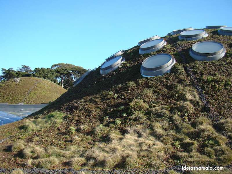 Living Roof - California Academy of Science