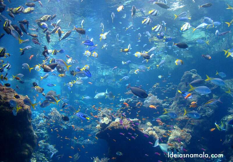 Corais das Filipinas - Cal Academy of Science
