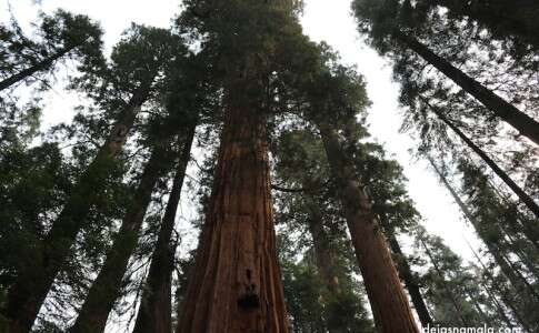 Sequoias National Park