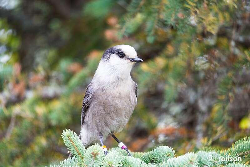 Algonquin Park -Canadá