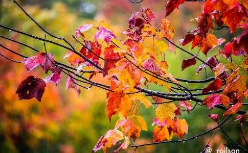 Folhas no Algonquin - Canadá