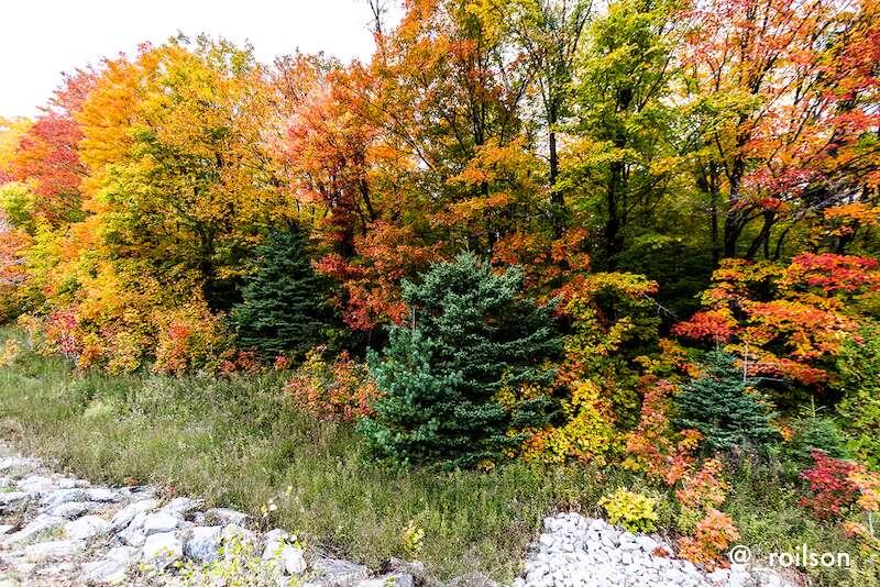 Outono no Algonquin - Canadá