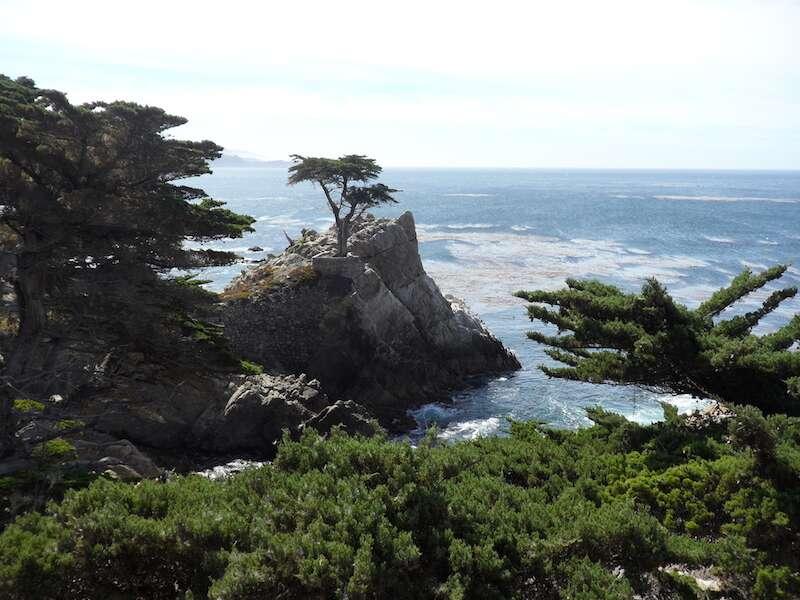 Cipreste solitário em Carmel - Califórnia