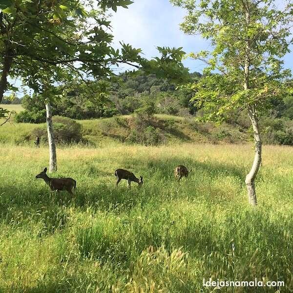 Bambis no Rancho San Antonio