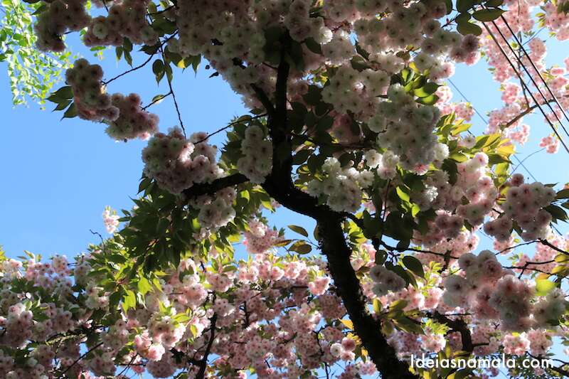 Sakura na subida para o Parque