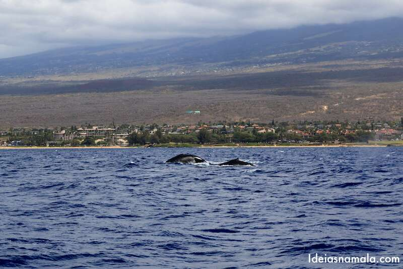 Maui - Havaí