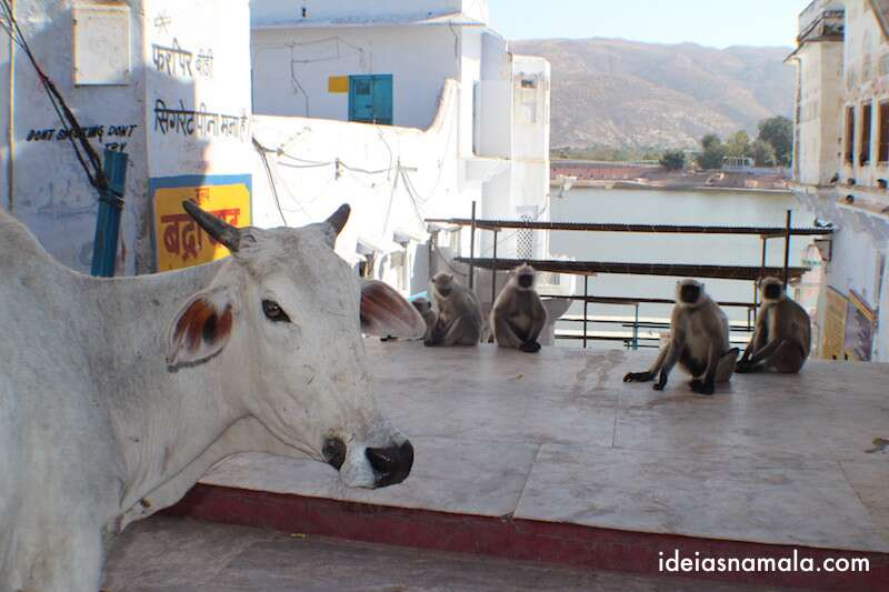 Pushkar - Índia