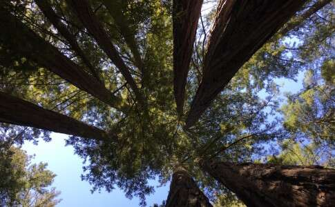 Vídeo: Big Basin Redwoods Park