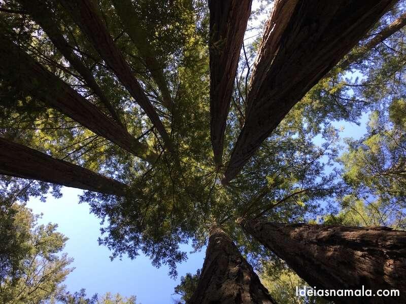 Redwoods gigantes no norte das Califórnia