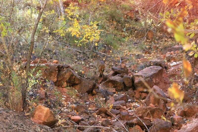 Roadtrip pelos parques nacionais de Utah e Arizona