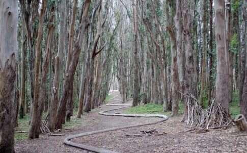 Parque Presidio