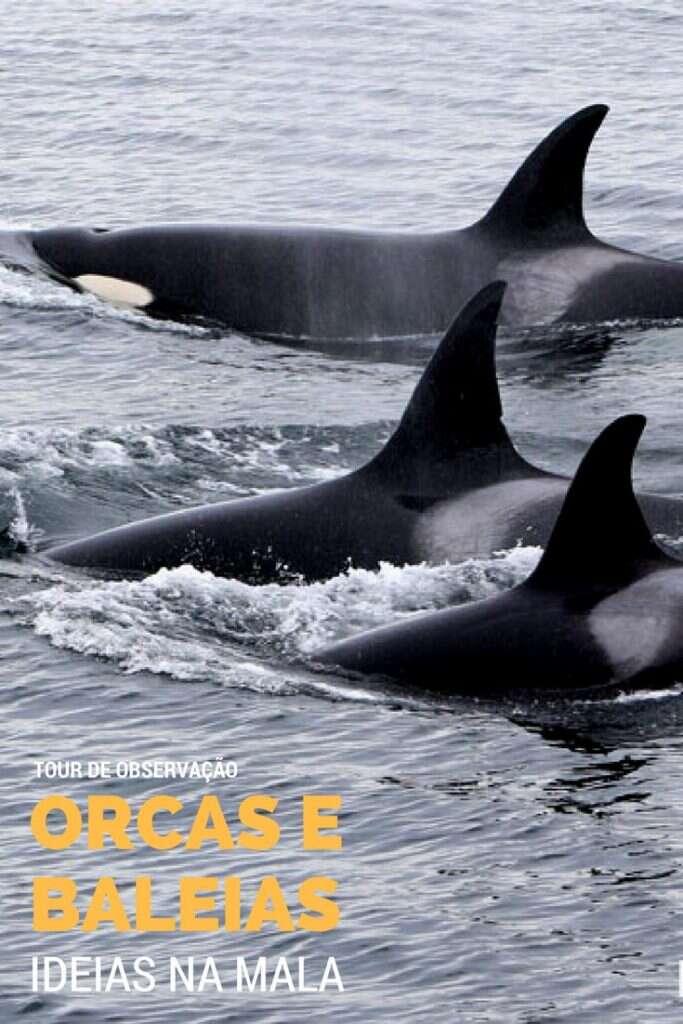 Orcas em Victoria B.C