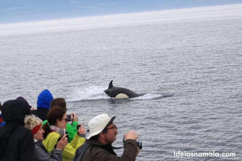 Tour Orcas Canada