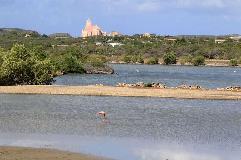 Flamingos em Curacao