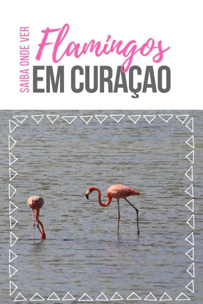 Saiba onde ver Flamingos em Curaçao e veja detalhes da nossa experiência nas salinas de Sint Willibrodus