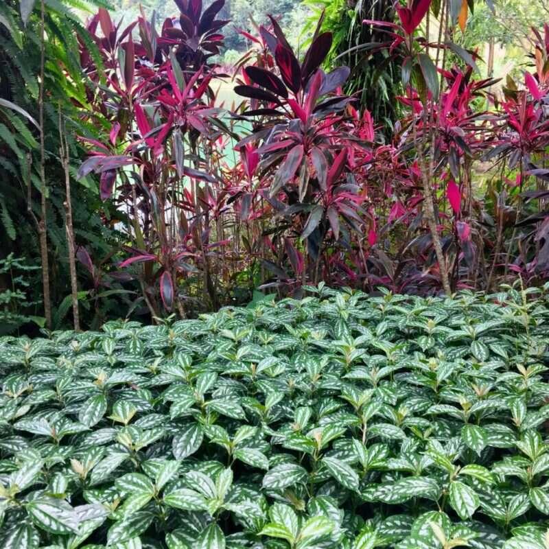 Jardins de Inhotim
