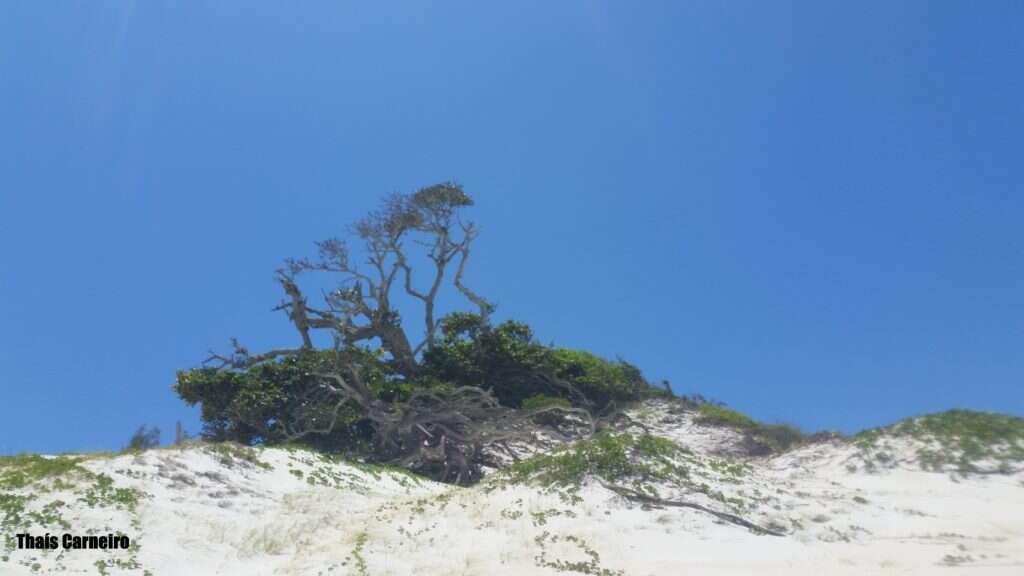 ilha do farol 3