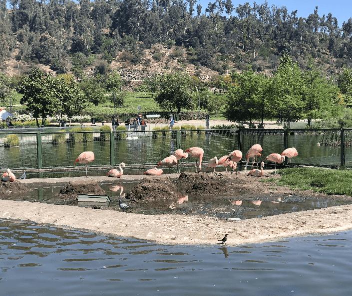 Parque Bicentenario, Santiago, Chile