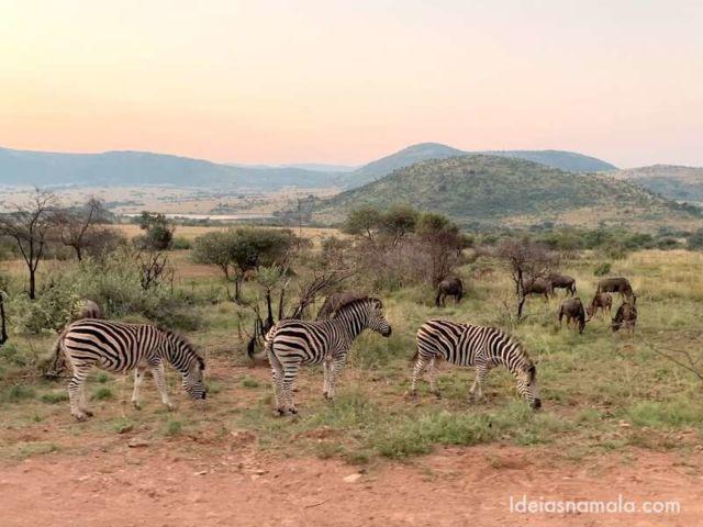 Safari Africa do Sul Pilanesberg23