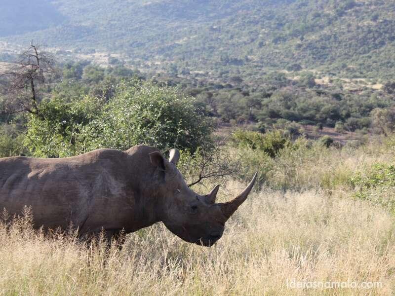 Safari em Pilanesberge