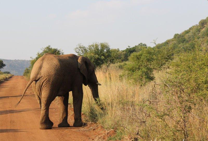 Safari africa do sul