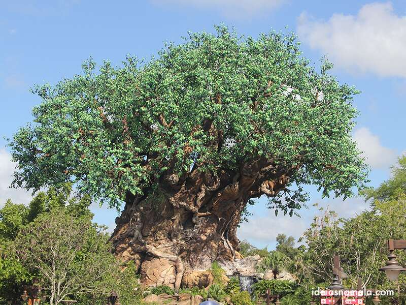 Roteiro Animal Kingdom Orlando