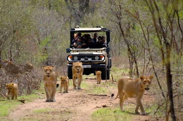 opcoes safari africa do sul